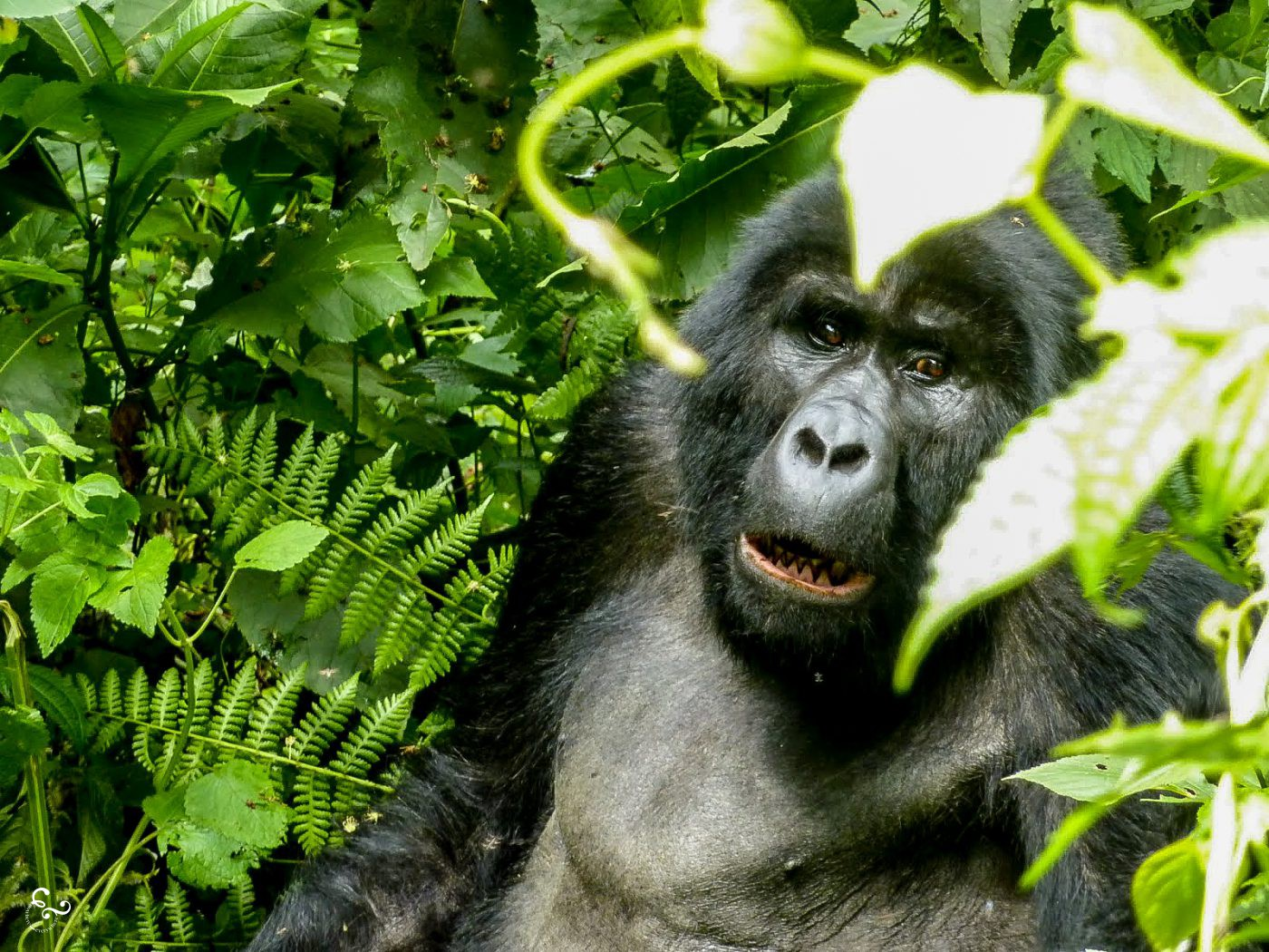 Africa Uganda Rwanda Forest Gorilla Trekking Lis Dingjan Nowhere & Everwhere Environmentalism Sustainable Travel