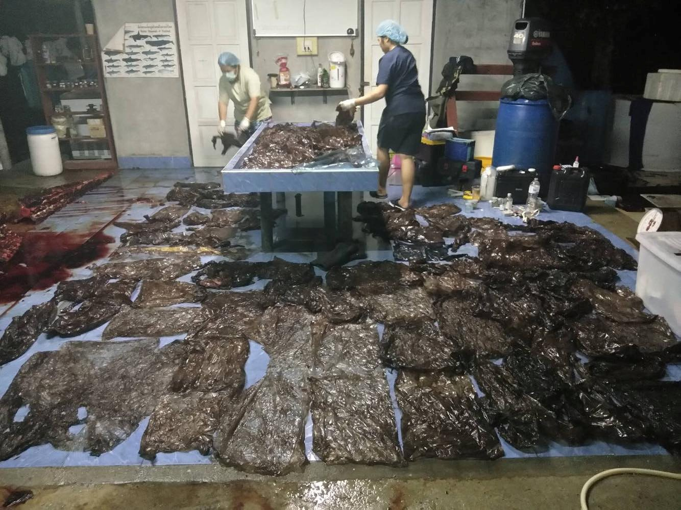Nowhere & Everywhere Sperm Whale Plastic Bags 80 Killed Southern Thailand Pilot Whale