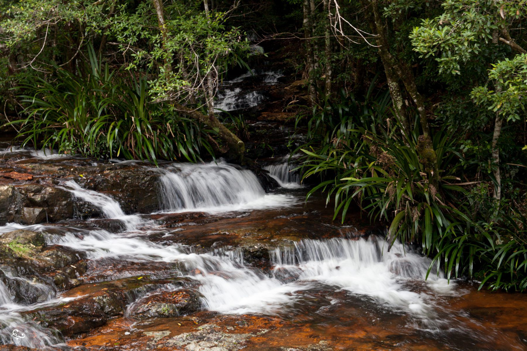 Purlingbrook Waterfalls Nowhere & Everywhere Gold Coast Hinterland Brisbane Lis Dingjan Photography Queensland #thisisqueensland Springbrook O'Reilly's Lamington National Parks