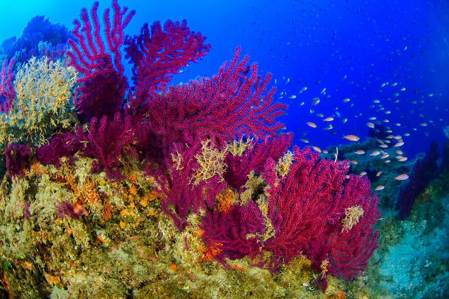 Nowhere & Everywhere Environment Weekly Roundup Travel Sustainability Plastic Pollution Rubbish Italy Coral Reef