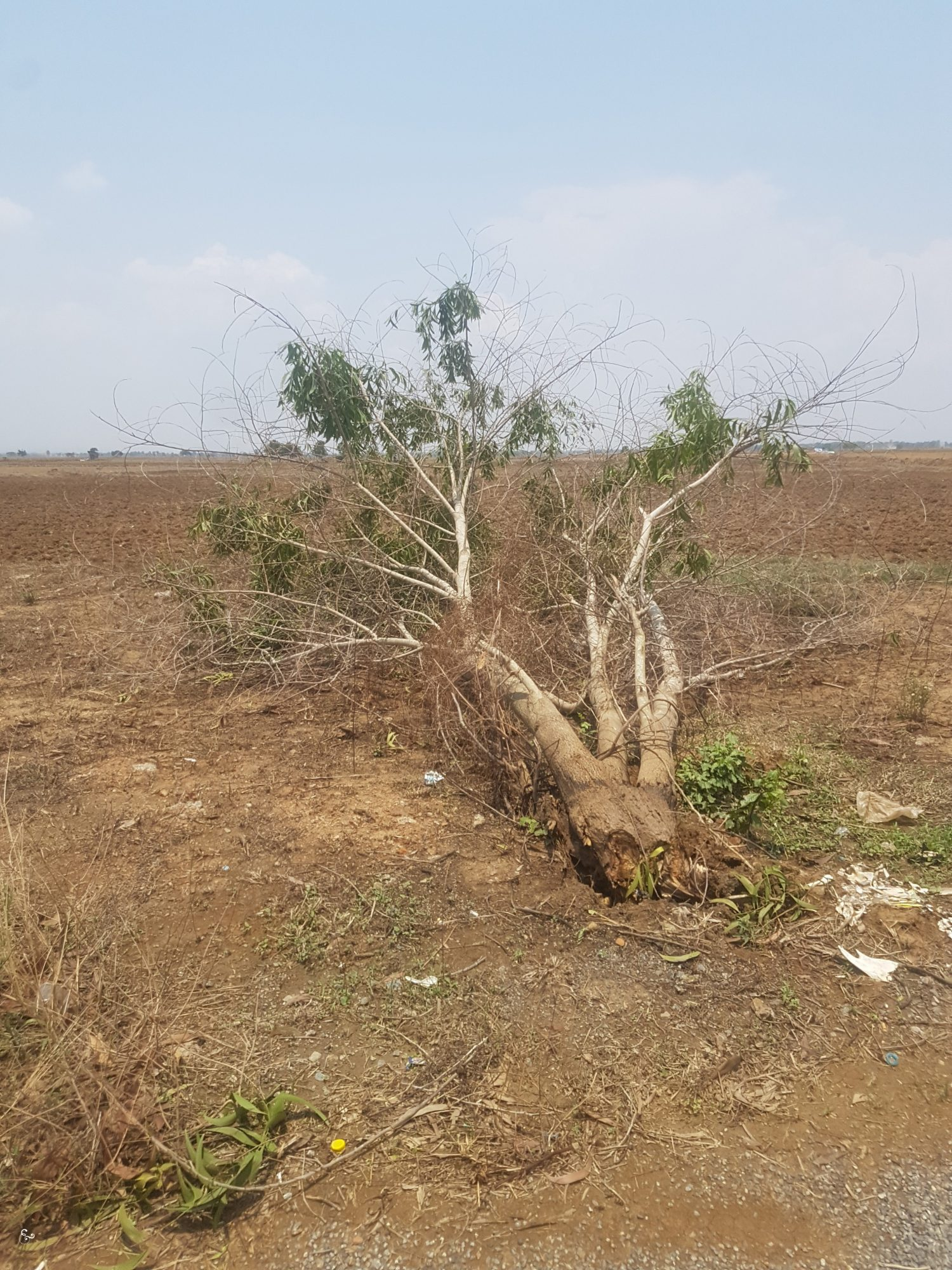 Tornada Cambodia Nowhere & Everywhere Storms Climate Change
