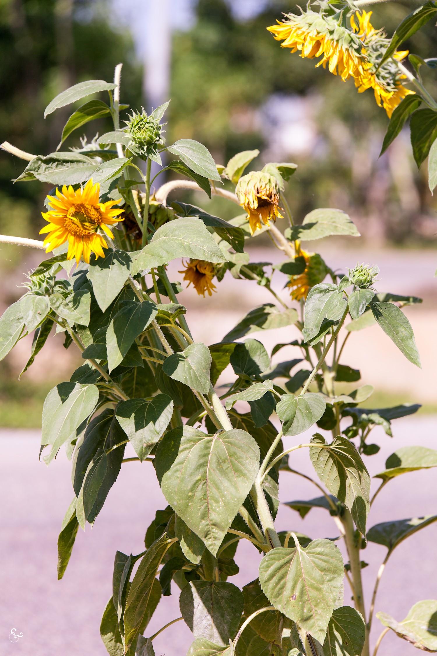 Nowhere & Everywhere Centre Renovation Ethical Labor Garden Plants Cambodia Basil