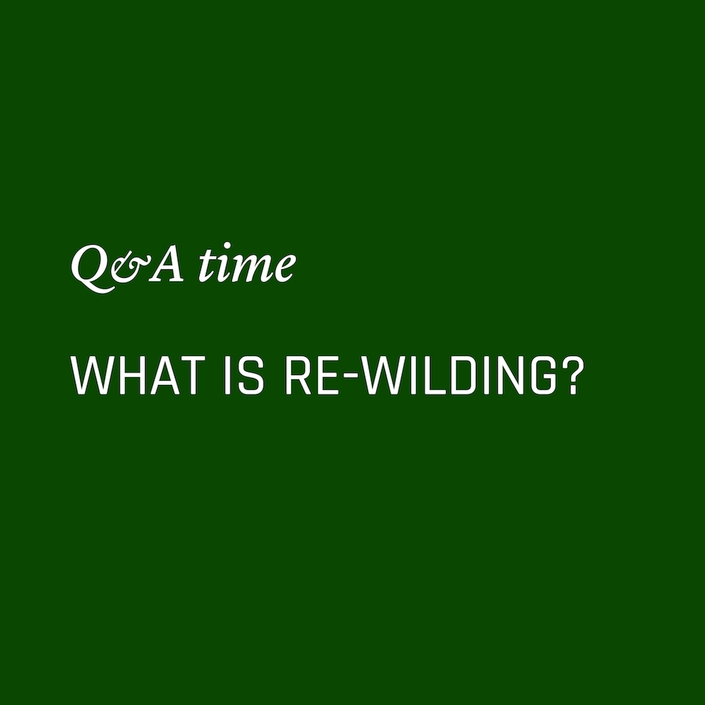What is rewilding? Nowhere & Everywhere Environmentalism Questions Sustainability Climate Change Plastic Free Zero Waste