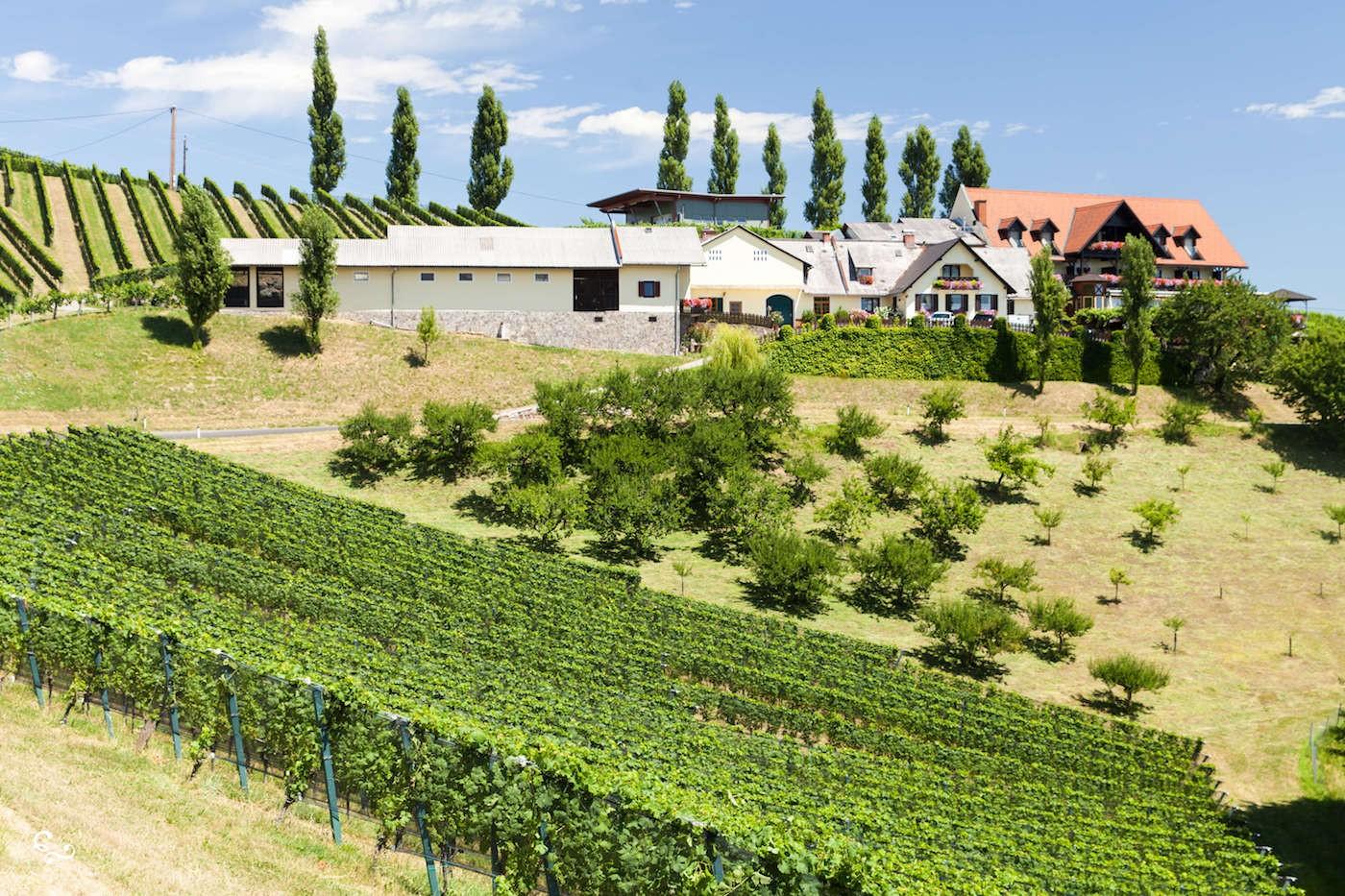Austria Styria Wine Region - Nowhere & Everywhere - Sustainable Eco Travel Environmentalism