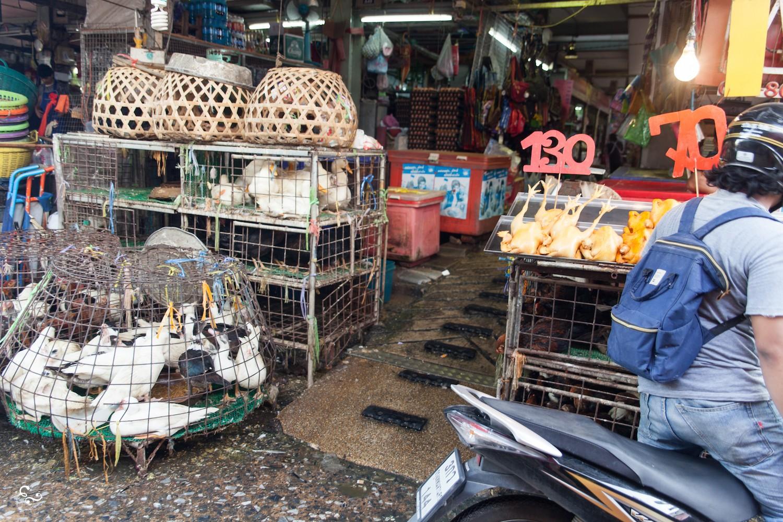 Wild animals wet market Bangkok Thailand - Nowhere & Everywhere - Lis Dingjan
